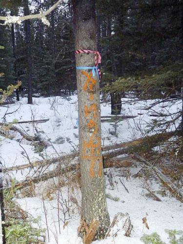 Matchstick Forest